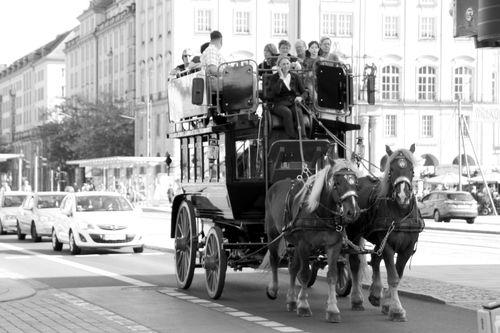 Pferde am Altmarkt?